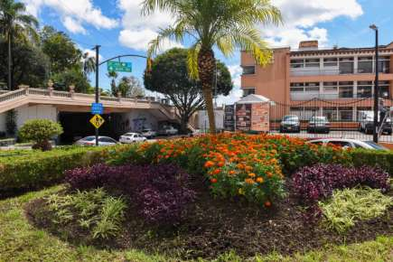 Siembran 15 mil flores de cempasúchil  en espacios públicos del municipio